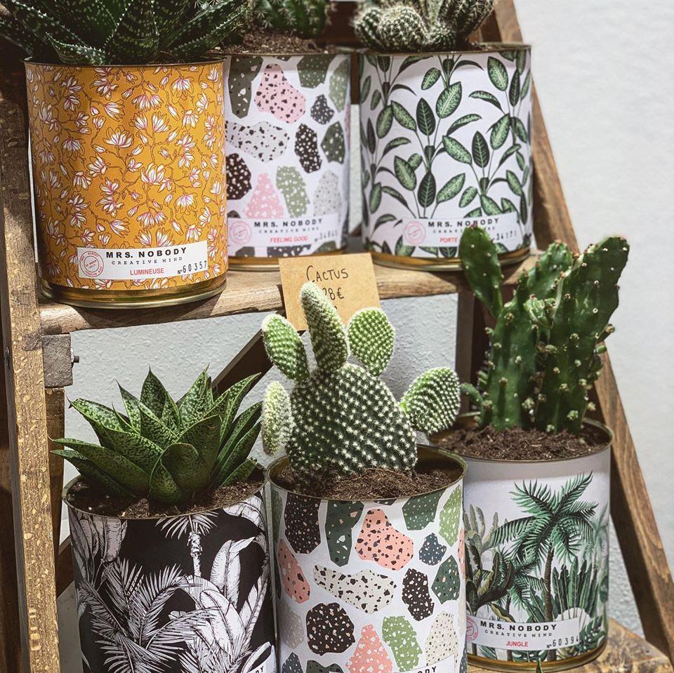 Cactus - 2019